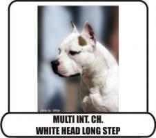 American Staffordshire Terrier aus TOP Verpaarung