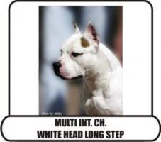 American Staffordshire Terrier  zu verkaufen