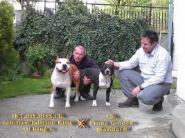 Amerikan Staffordshire Terrier Welpen aus TOP Verpaarung