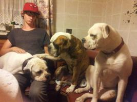 Foto 9 Amerikaniche Bulldogs Johnson Type