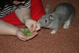 Foto 2 An alle lieben Tierfreunde,