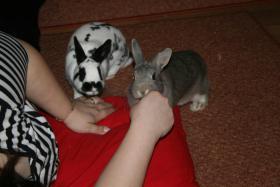 Foto 3 An alle lieben Tierfreunde,