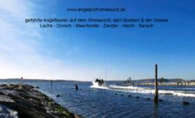 Angeltouren Stralsund/ Rügen/Ostsee