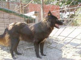 Foto 3 Apollo(ca. 2007geb)