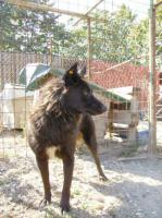 Foto 4 Apollo(ca. 2007geb)