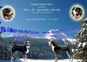 Foto 2 Appenzeller Sennenhund Welpen mit Papiere