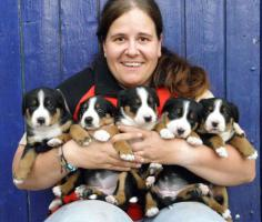 Appenzeller Sennenhund wir vergeben Welpen