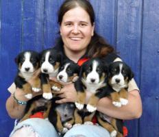 Foto 2 Appenzeller Sennenhund wir vergeben Welpen