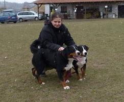 Foto 2 Appenzeller Sennenhund - Welpen zu vergeben