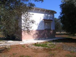 Foto 5 Apulien, Puglia, San Pietro in Bevagna Privatverkauf wunderschöner Olivenhain mit kl.Haus zum Fertigrenovieren