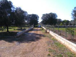 Foto 13 Apulien, Puglia, San Pietro in Bevagna Privatverkauf wunderschöner Olivenhain mit kl.Haus zum Fertigrenovieren