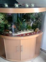 Foto 2 Aqarium 350l von juwel mit ca.50 Fischen zu verkaufen