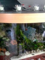 Foto 3 Aqarium 350l von juwel mit ca.50 Fischen zu verkaufen