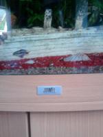 Foto 4 Aqarium 350l von juwel mit ca.50 Fischen zu verkaufen