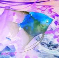 Aquarienhilfe