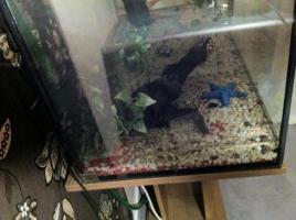 Foto 3 Aquarium