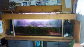 Foto 4 Aquarium
