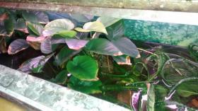 Foto 6 Aquarium