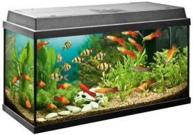 Aquarium 110 Liter mit Filter, Heizstab, Essensautomat