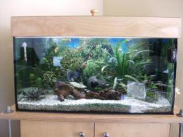 aquarium 120l in g tersloh rechteckig quader aquarium. Black Bedroom Furniture Sets. Home Design Ideas