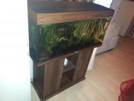 Aquarium 180 Liter mit unterschrank abzugeben