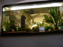 Aquarium 180l komplett mit Allem drum und dran - ideal für Anfänger