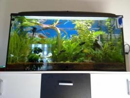Foto 2 Aquarium 200L m.Unterschrank & Fischen