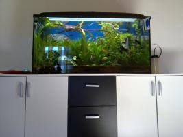 Foto 3 Aquarium 200L m.Unterschrank & Fischen