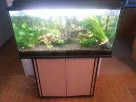 Aquarium 200l inkl. Unterschrank und EHEIM Aussenfilter