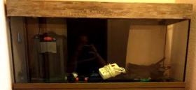 Foto 3 Aquarium 240 Liter und Abdeckung Filter viel Zubehör