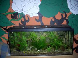 Aquarium 240l mit viel Zubehör
