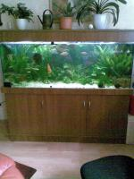 Aquarium 450l.