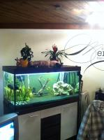 Foto 3 Aquarium 480 Liter ''MP EHEIM Aquatics''