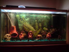Aquarium 60x30 komplett