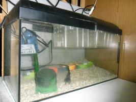 Foto 2 Aquarium für die Aufzucht von Fischbrut, komplette Ausrüstung