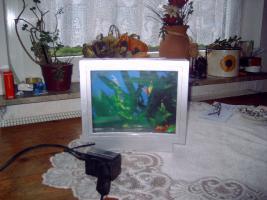Aquarium Deko mit Zierfischen u.Licht