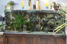 Aquarium mit Filter, Untergestell und Unterschrank