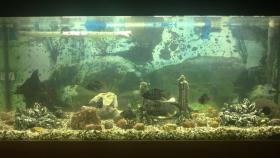 Aquarium mit Fischen und Zubeh�r