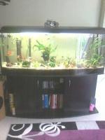 Foto 2 Aquarium Panuramer ca.440 Liter