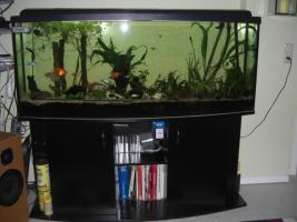 Foto 3 Aquarium Panuramer ca.440 Liter