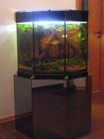 Aquarium Sonderanfertigung 8-eck