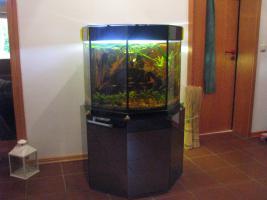 Foto 2 Aquarium Sonderanfertigung 8-eck