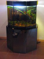 Foto 3 Aquarium Sonderanfertigung 8-eck