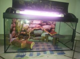 Aquarium/Terrarium aus Glas +Abdeckung+Beleuchtung +Zubeh�r
