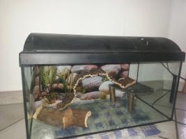 Foto 3 Aquarium/Terrarium aus Glas +Abdeckung+Beleuchtung +Zubehör