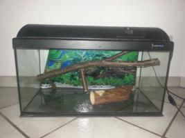 Foto 5 Aquarium/Terrarium aus Glas +Abdeckung+Beleuchtung +Zubehör