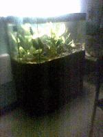Foto 3 Aquarium mit Unterschrank