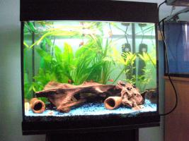 Foto 2 Aquarium mit Unterschrank