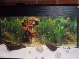 Aquarium mit Unterschrank und viel Zubehör