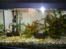 Foto 2 Aquarium mit allem drum und dran